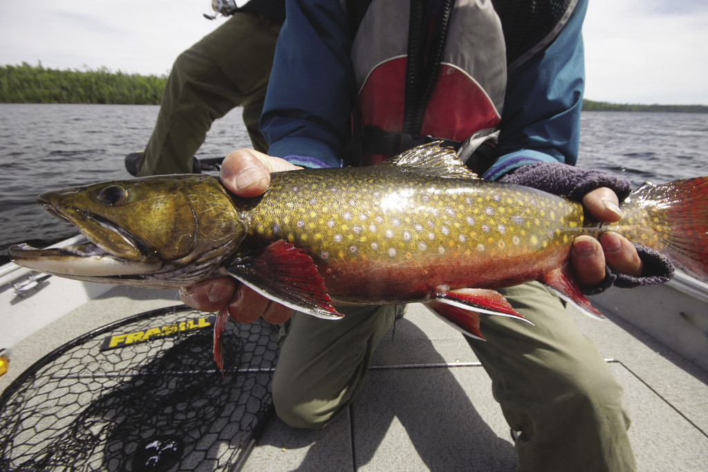 The Nipigon River produces some of the biggest brook trout in the world. | GORD ELLIS