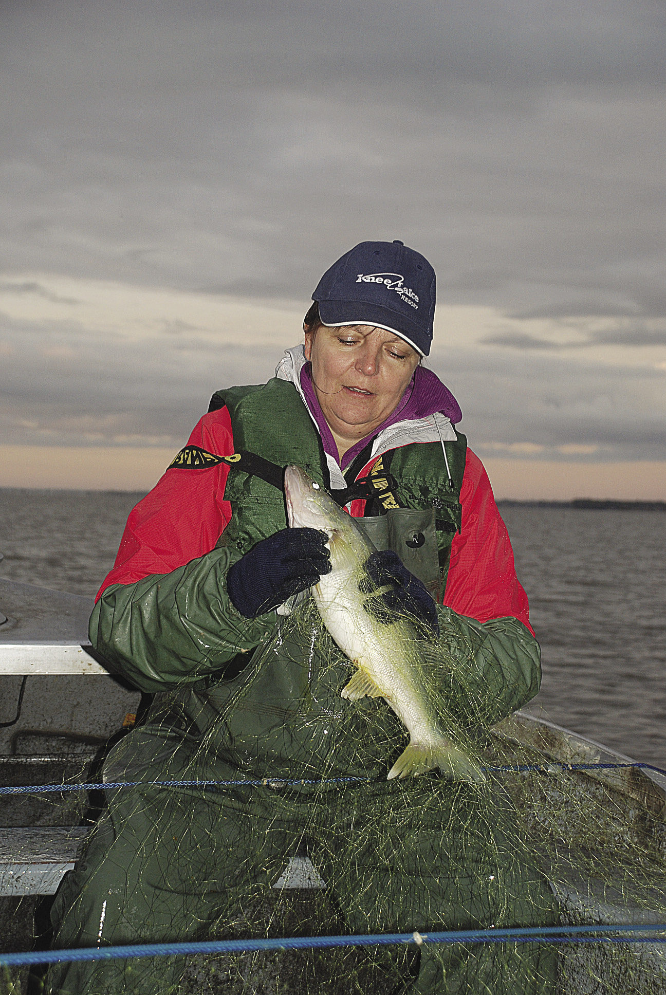 A few years ago, after I wrote about pickerel fishing on Lake Winnipeg, a retired fish biologist contacted me to say that we had actually been fishing for walleye not pickerel. Here's my friend Shel holding her catch. Walleye or pickerel? |ELLE ANDRA-WARNER