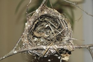 Before people, birds were the world's first basket weavers, carefully interlacing fibers to build shelter and comfort. | Julia Prinselaar