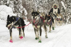 The author's husband, Matt Schmidt, finished the 12-dog race in 2nd place. | NACE HAGEMANN