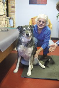 Dr. Claudia Cottrell's patients consist of dogs, cats and horses. | Submitted