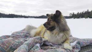 A dog's version of glamping? Timber out on the lake during a day of ice fishing. | JULIA PRINSELAAR