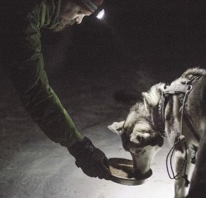 One of the handlers coaxes Ringo to eat during a race checkpoint. | ANNIE FONTAINE