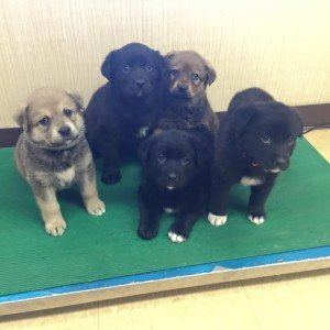 Puppies from Paws for Love. | KIM TAMMINEN