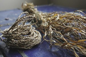 Dried ribbons of nettle fibers can be made into cordage. | JULIA PRINSELAAR