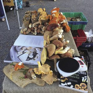 A table of wild mushrooms at the Thunder Bay Country Market. | PAUL DROMBOLIS