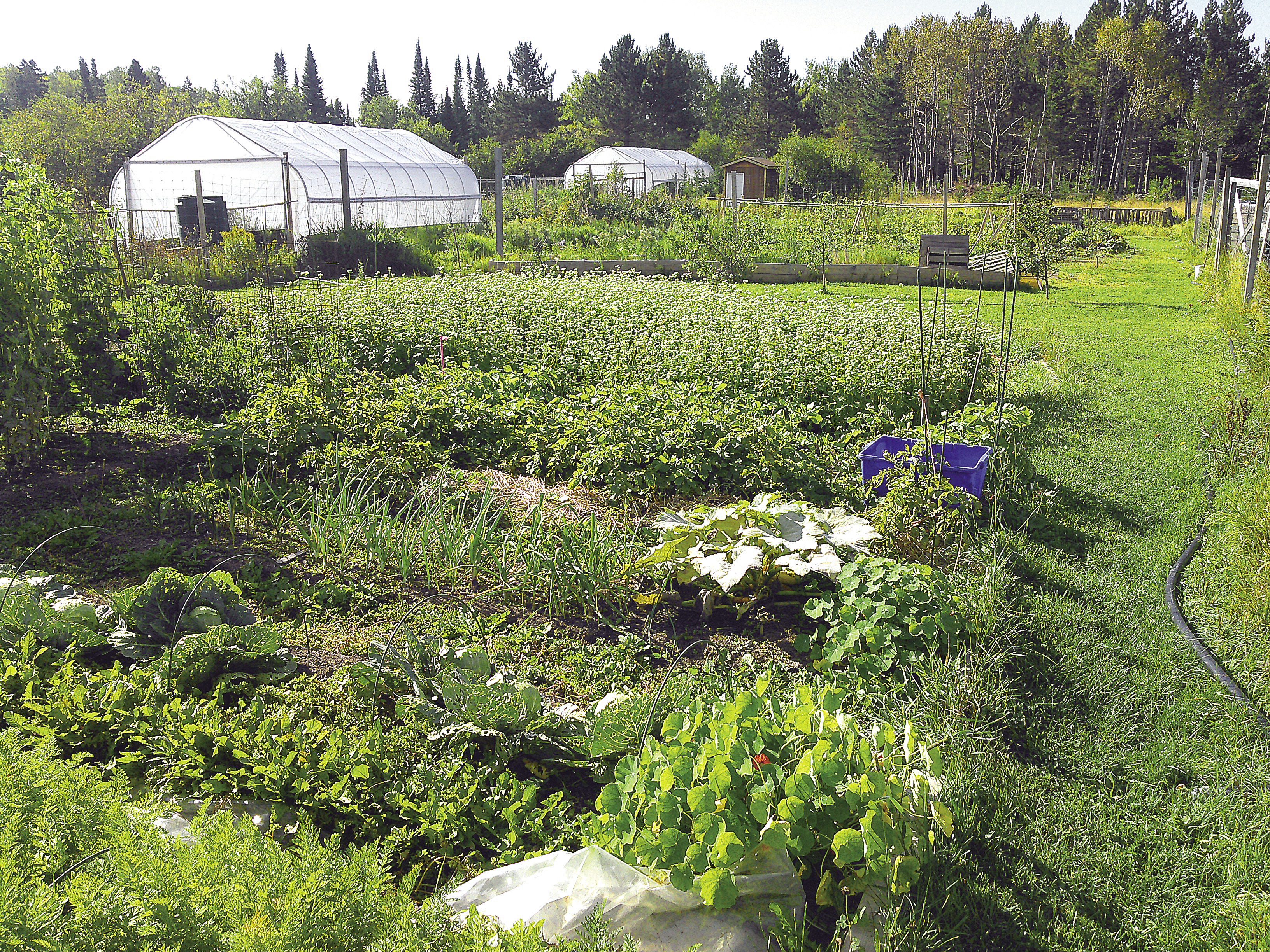 gardening builds community in grand portage northern wilds