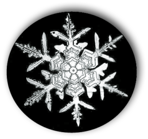 Snowflake photographed by  Wilson Bentley. | WILSON BENTLEY
