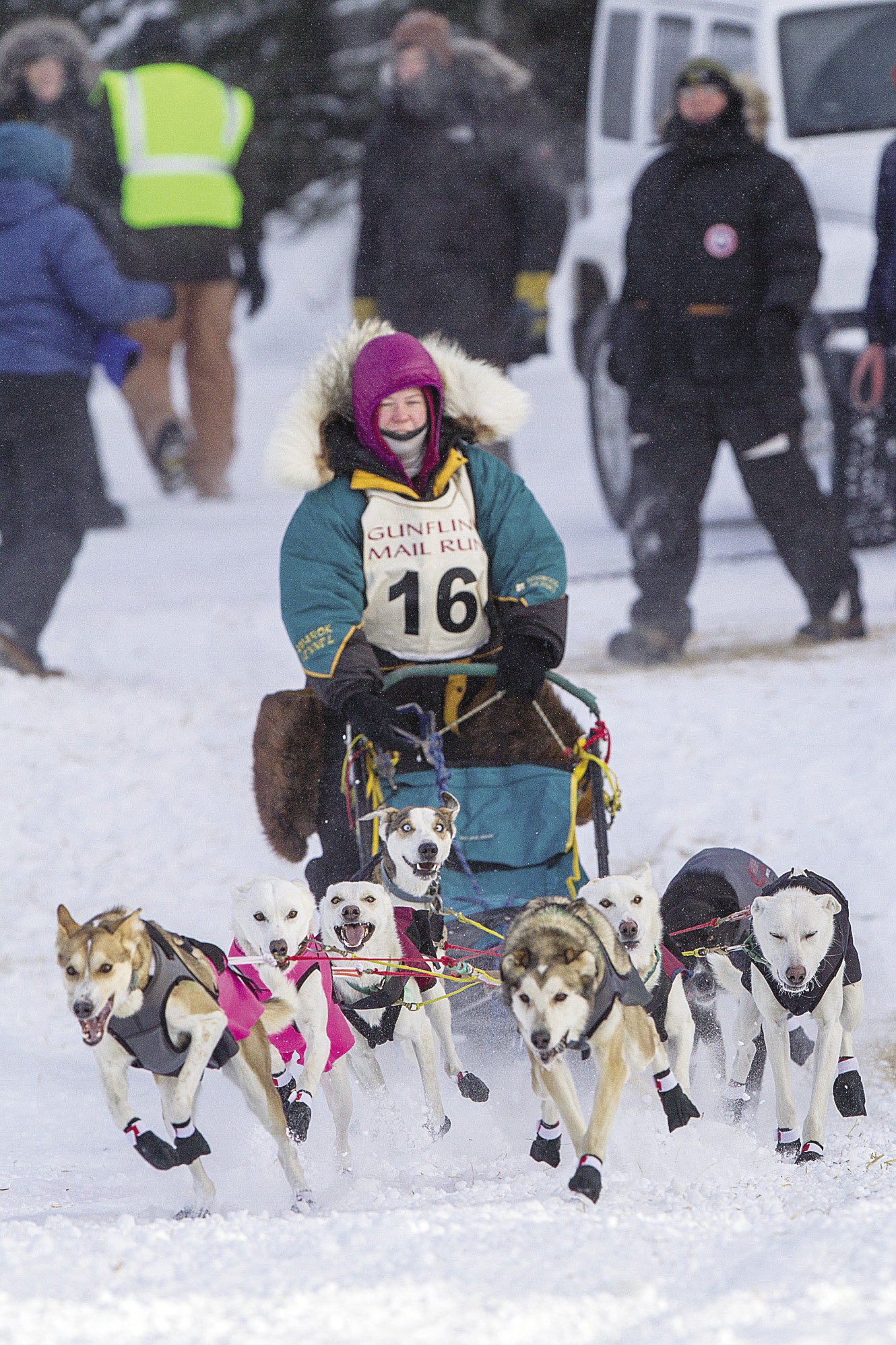 Gearing Up for a Sled Dog Race | Northern Wilds Magazine