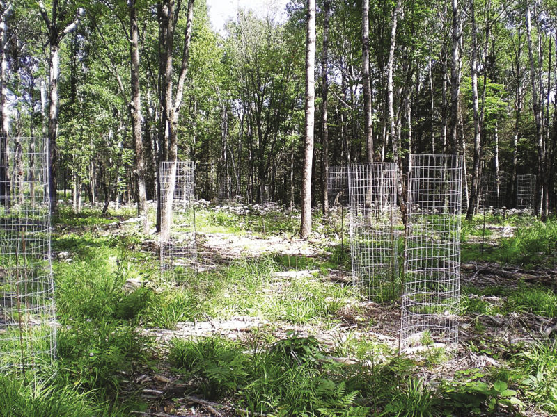 Deer fencing available for north shore landowners