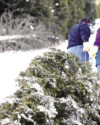 Gathering holiday greens on Superior National Forest