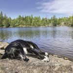 Leo naps in the sun next to the Agamok River along the Kekekabic Trail. | ERIC CHANDLER