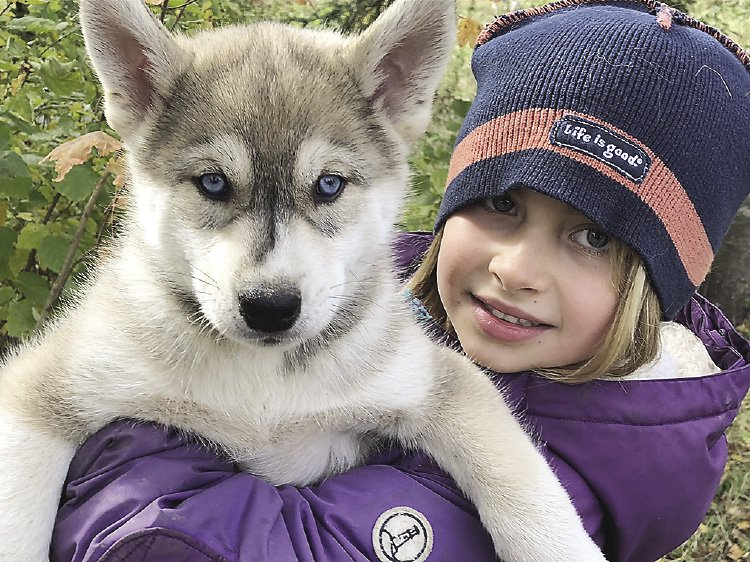 Teaching the next generation of sled dogs and mushers.