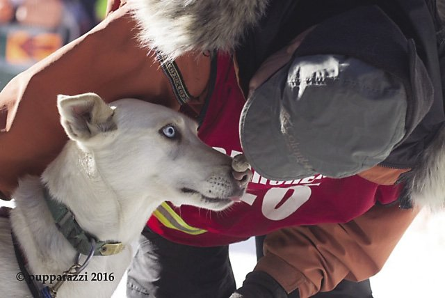 Musher Mary Manning and one of her Alaskan huskies.
