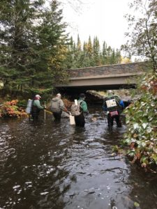 The DNR and volunteers seek brook trout beneath the Highway 61 bridge on Kadunce Creek.