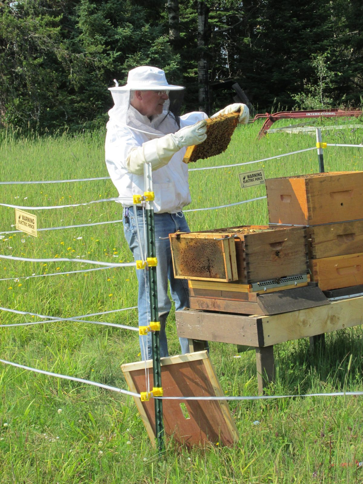 A Langstroth hive has frames that slide in and out where the bees build their honeycombs making it easy for beekeepers to check whether the hive is healthy, whether it's producing honey, and whether the queen bee is laying enough eggs.