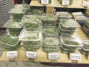 An assortment of leafy vegetables from Veg-e-tate Market Garden.
